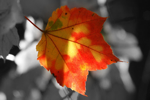 Tri-color leaf selective desaturation