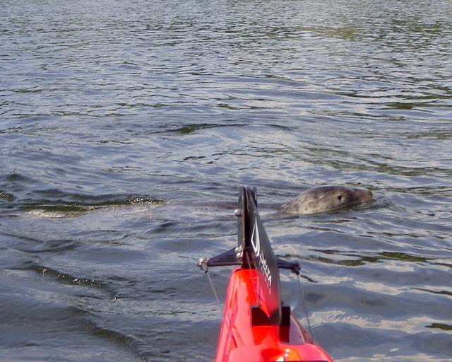2011-06-26 Cadboro Bay_0074 copy