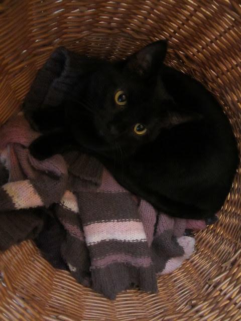 Flo in a basket (2)