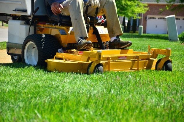 Need New Grass for Your Lawn? Here are Five Options for You