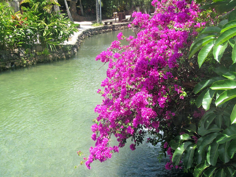 photo Hawaii53.jpg