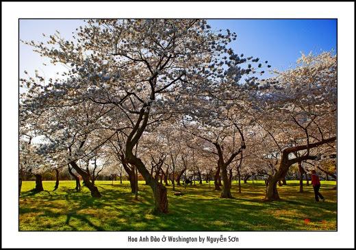 011 Mùa Xuân Washington