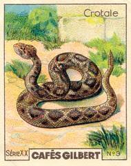 gilbert reptile 2