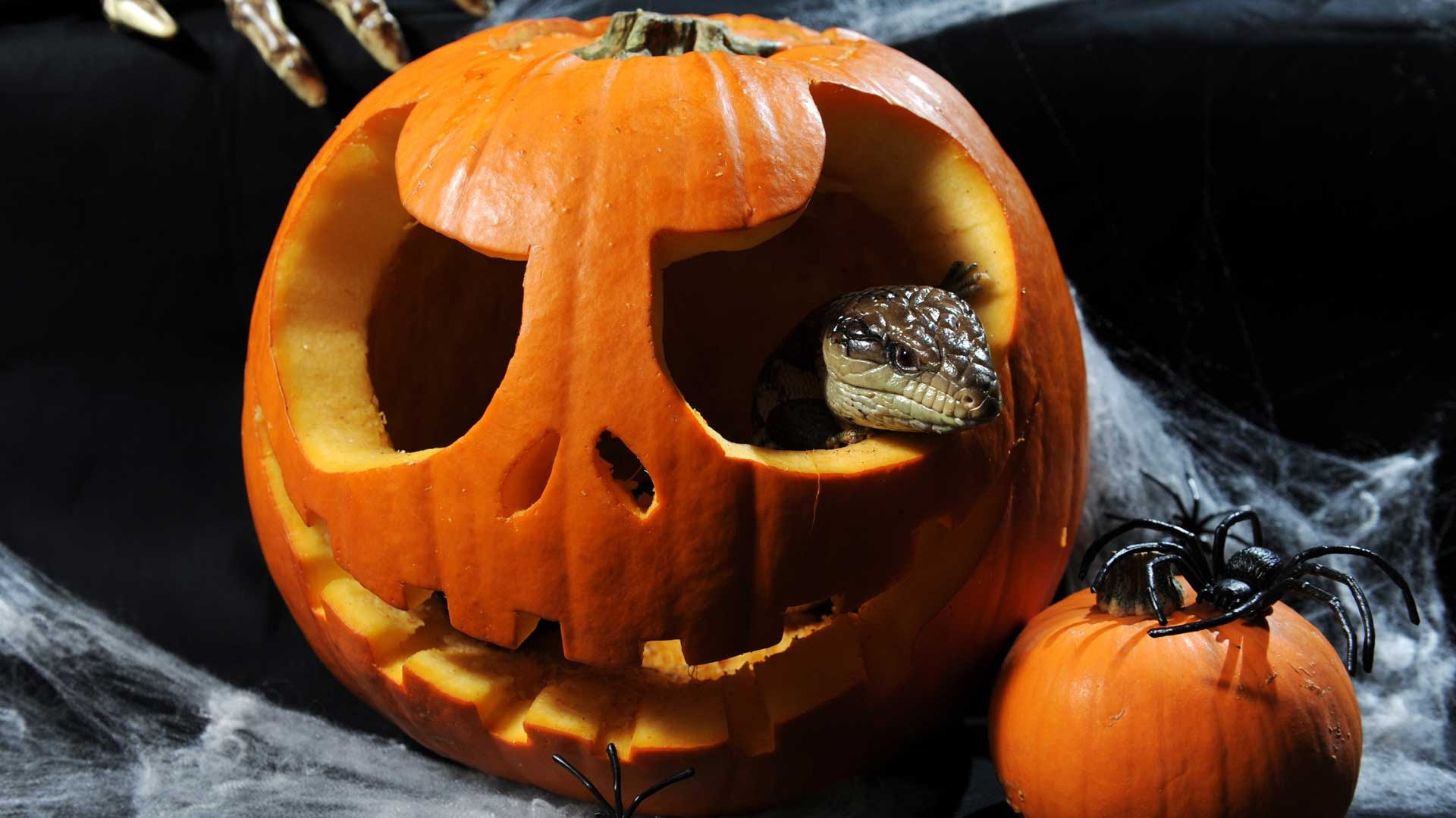 Why Australians cackle in the face of Halloween