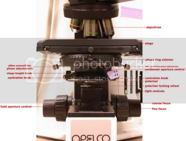 Aligning The Phase On The Olympus Fluorescent Microscope