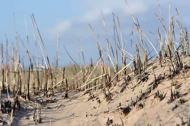 burnt dune