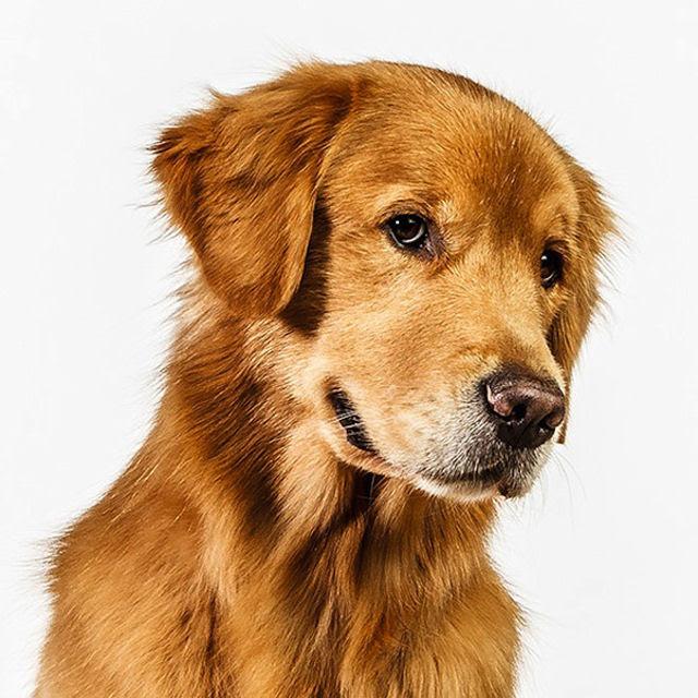 Retratos de cães cheios de personalidade 02