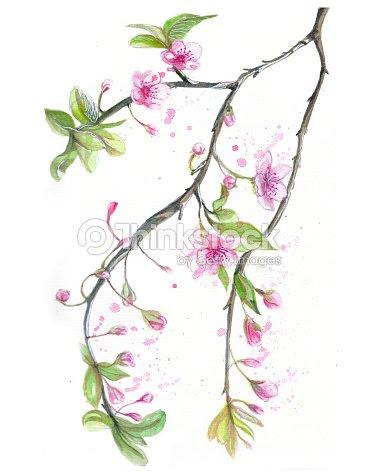 Acuarela Dibujo De Flores De Cerezo Cerezo Cerezo Flores De Color
