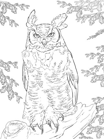 realistic great horned owl coloring page  supercoloring