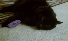 Huggy Bear with the new mouse