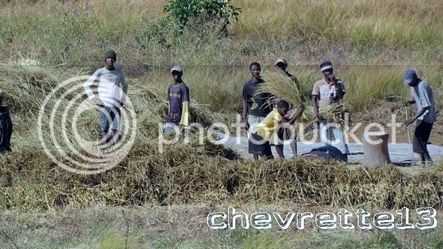 http://i1252.photobucket.com/albums/hh578/chevrette13/Madagascar/IMG_0951640x480_zps59f30a7d.jpg