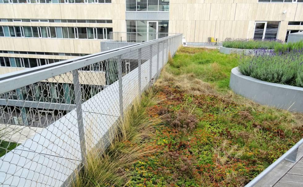 Techo verde en la facultad de Humanidades de la Universidad de Copenhague.
