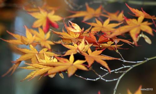 un poco más de otoño 25-11-2010 18-37-12