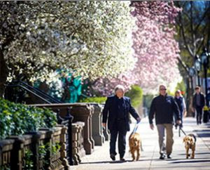 """The Rev. Ingo Dutzmann, left, pastor of First Lutheran Church in Boston, and Lutheran Church Charities (LCC) staff member Rich Martin return from a walk to the bombing scene on Boylston Street with LCC Comfort Dogs """"Luther"""" and """"Maggie."""" (Lutheran Church Charities)"""