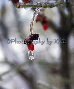 an ice drop on a red berry