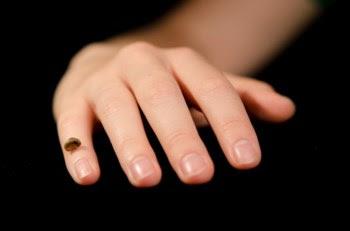 Réplica da falange que permitiu descobrir um novo grupo de humanos, os denisovanos