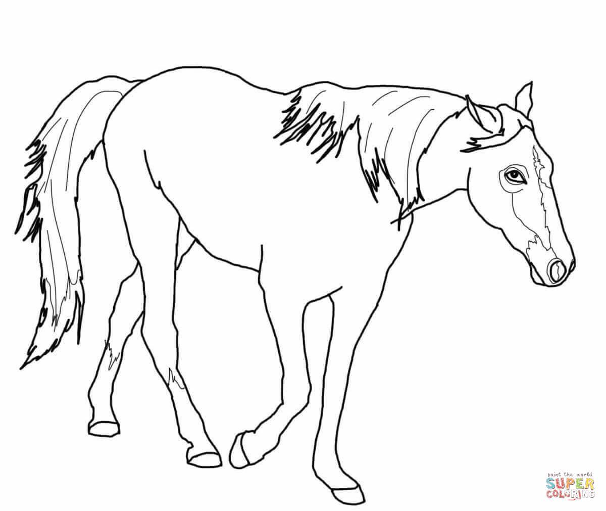 Jumping Horse Drawing at GetDrawings   Free download