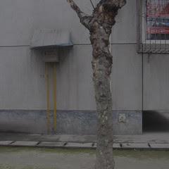 Grey and Brown (mostly grey), Honguang