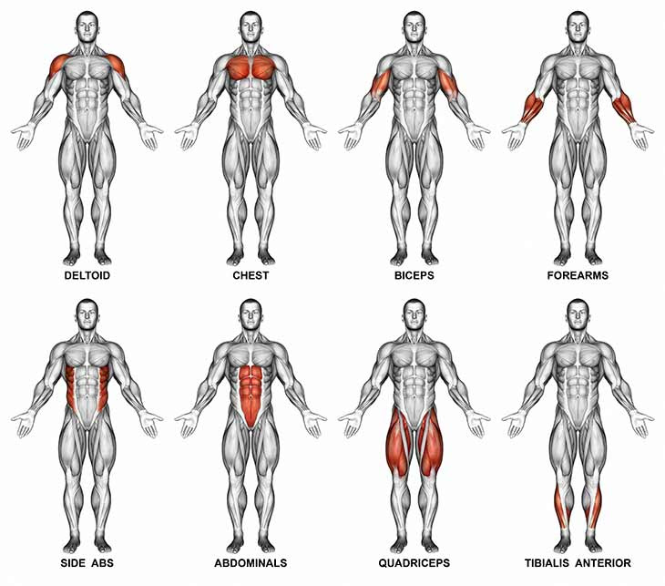Muscle Groups that Beginners should focus on | RDX Sports Blog