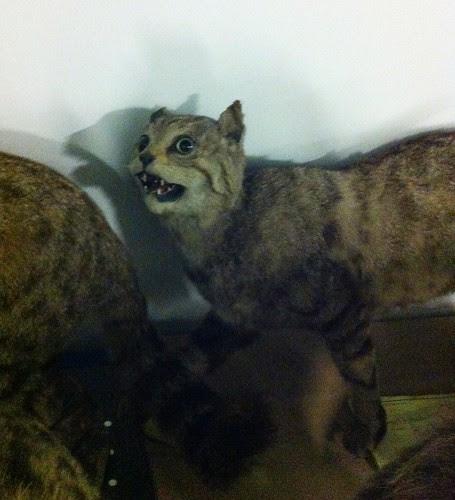 lolworthy wildcat