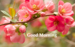 184 Flower Good Morning Hd Images Wallpaper For Whatsapp Facebook