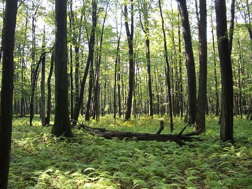 Laurel Highlands Hiking Trail Trees
