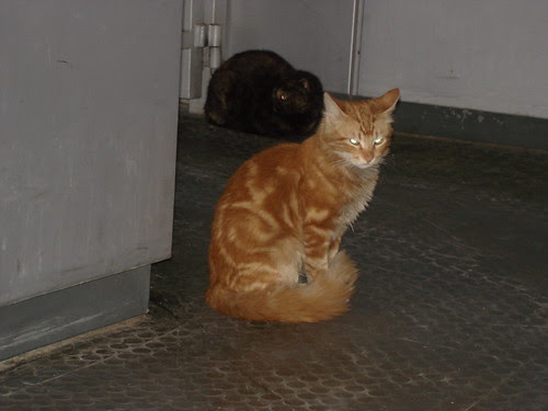 Red tabby at the train station