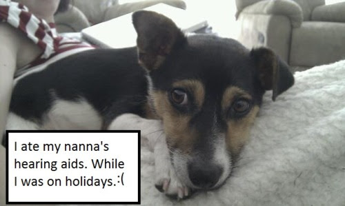 I ate my nanna's hearing aids. While I was on holidays. :(