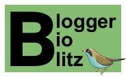 Blogger BioBlitz mini logo, words and birdy