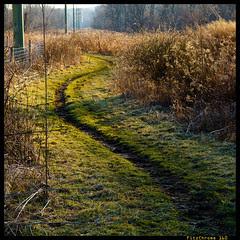 The Path XXVII