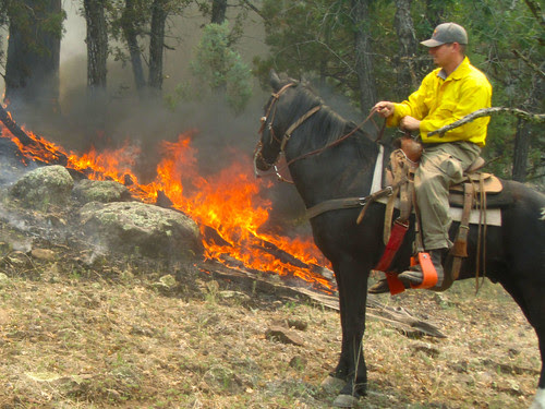 Scouting by horseback by Gila Forest