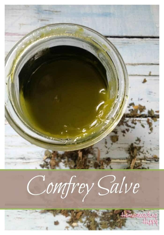 Comfrey is an amazing herb with many uses.  Learn how to make a salve for soothing minor bumps and bruises. ~The Homesteading Hippy #homesteadhippy #fromthefarm #naturalmedicine #comfrey