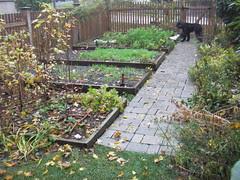 Nov 8 garden