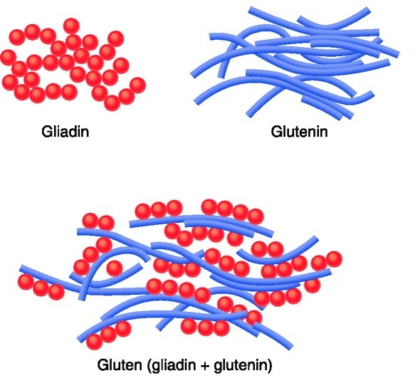 science prose lets call a spade a spade glutenfree is