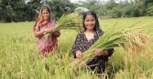 Training to Women Engaged in Agriculture Sector