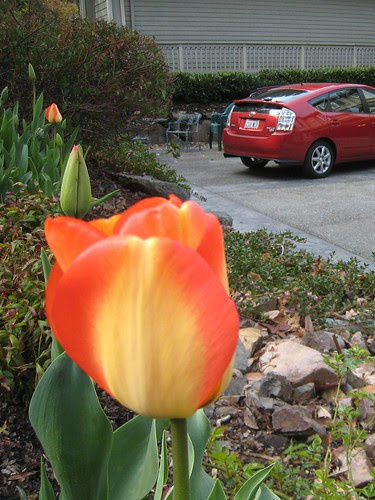 Prius and Tulips in the Springtime.