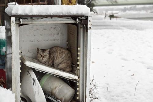 雪の多摩川猫