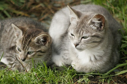 Two Feral Kittens by Pagani, all rights reserved