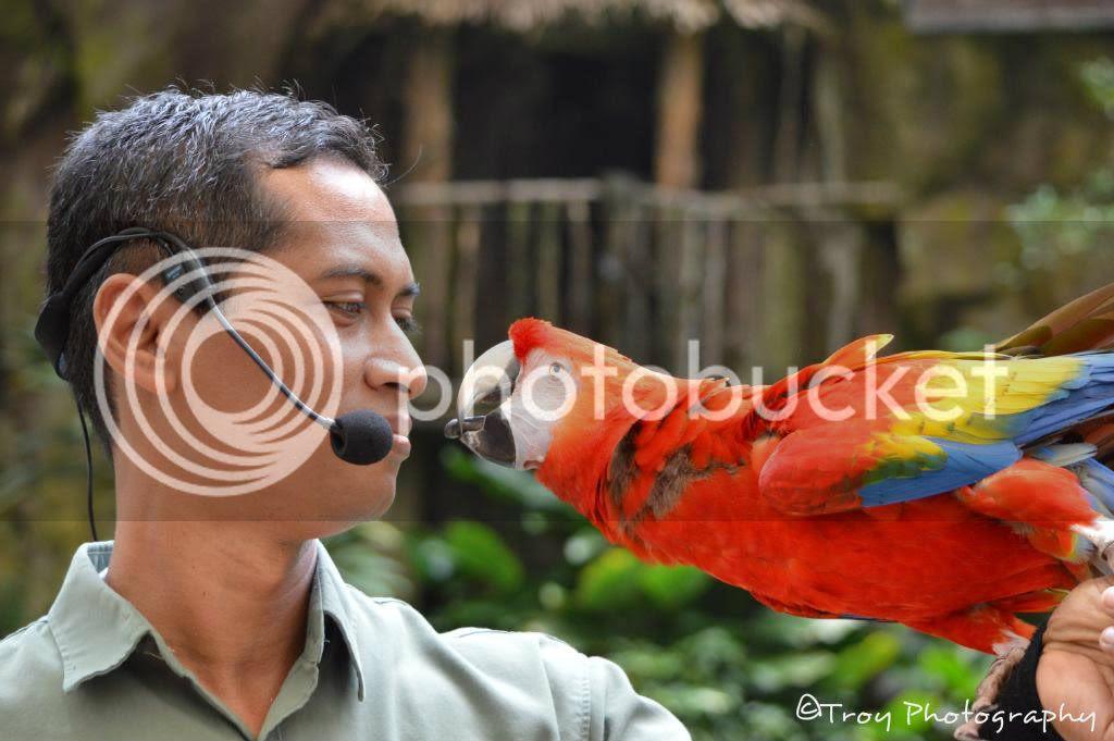 colorful parrots photo: 004514de 8051c4f5.jpg