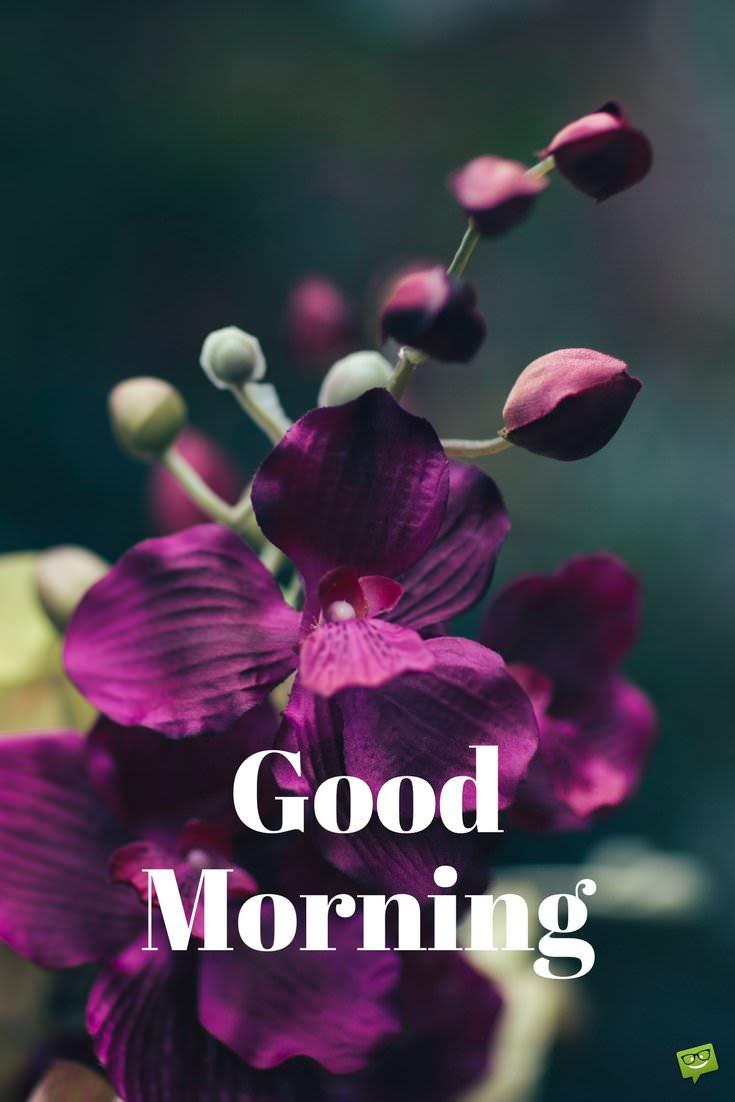 Good Morning Photo 5012 Hdwpro