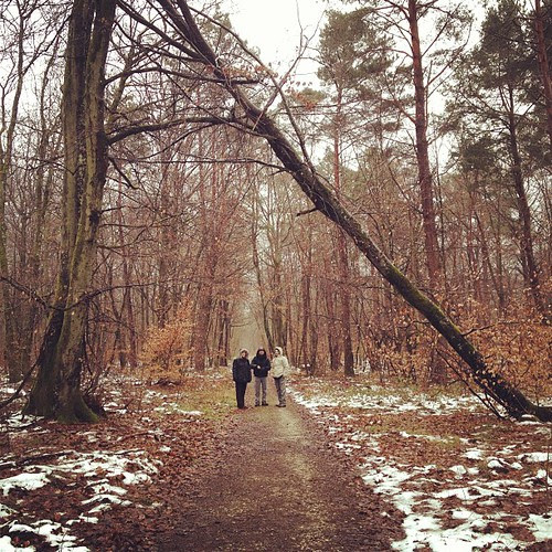 We decided to go in the forest! by la casa a pois