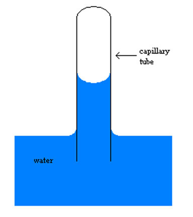 Image result for capillary tube