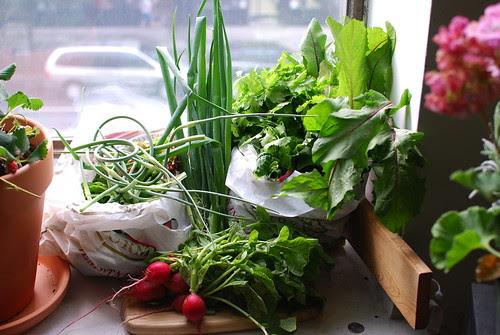 Veggie Share Week 1