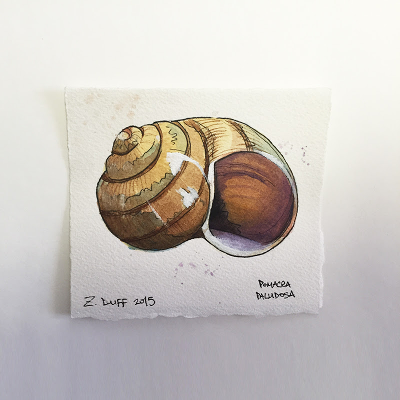 Watercolor Snail At Getdrawingscom Free For Personal Use