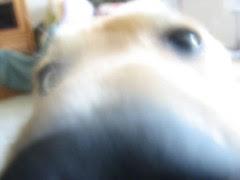 Hooper investigates the lens