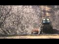 Watch More Than Honey Streaming Megavideo free HD
