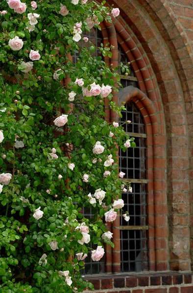 New Dawn Roses are soooooo beautiful/ATTRACTS: Bluebirds. A climbing Rose.