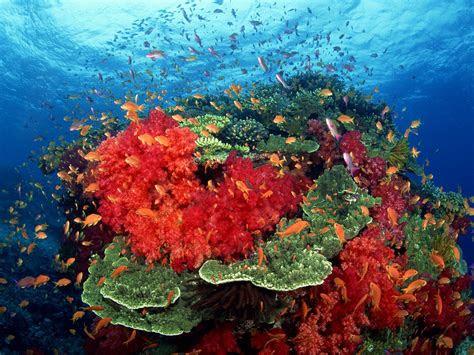 animated coral reef wallpaper wallpapersafari