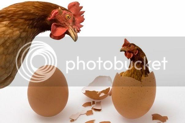 Nghịch lý con gà và quả trứng qua những bức ảnh vui
