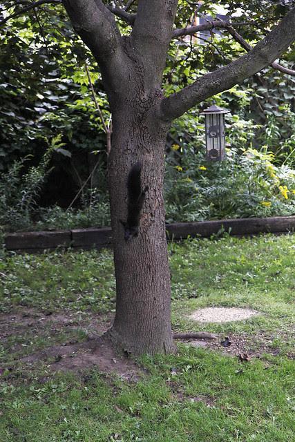 5 squirrel
